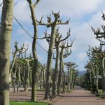 interesting trees in park