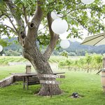 Ceremony under the walnut tree