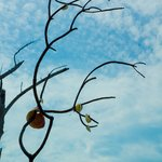 Driftwood City Englewood, FL