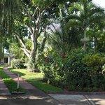 Hotel or Garden?