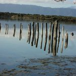 Remnants of an old pier in the lagoon, Kapiti Island