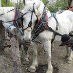 Foto de D & S Alaskan Trail Rides