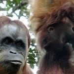 Sumatra Jungle Tours - Private Day Tours