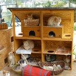 Pussy Cat Palace