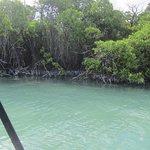 Mangroves in Pigeon Creek.