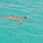 Swimming with turtles, hotel glass bottom boat