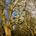 magnifiques arbres dans le parc