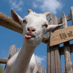 you are welcome in our crazy goat bar