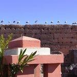 les cigognes vues de la terrasse