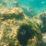 Coconut Court's reef