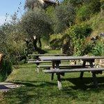 tables de pique-nique au milieu des oliviers