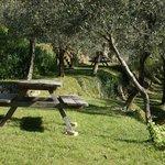 les tables de pique-nique sur les restanques sous les oliviers