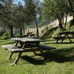 tables de pique-nique à l'ombre des oliviers