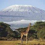 beautiful game(giraffe)
