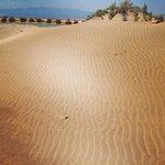 dunas en la playa del Trabucador