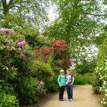 Rhodendron and Hydrangea Walk