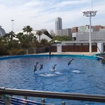 Dolphin show (no additional fee!)