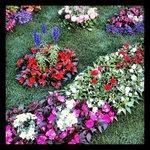 Ricetto in fiore