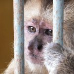 Cute monkey - sad story
