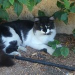 "A cat we've named George. Usually out front lazying around. Very nice and not afriad ("" ,)"
