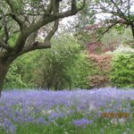 The bluebells were magnificent this year. Just a short walk from TOH