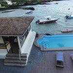 sea lion visit on hotel pool