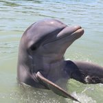 dolphin clapping