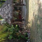 Tiki with hammocks