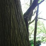 Squrrel in the park