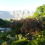 view of table mtn from the garden