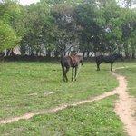 金門高中旁邊;享受陽光,悠閒的馬. 金門,台灣.  Look those horses feeling relaxed  and enjoying themselves  in the s