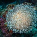 beautiful under water