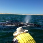 Whale watching - Magdalena Bay