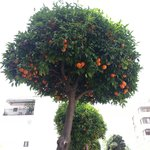 Orange tree lined avenues which lead you into the centre