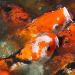 peces (lago)