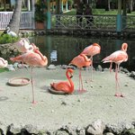 розовый фламинго -дитя заката!