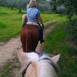 Olive grove trekking