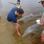 Me feeding the dolphins at Tin Can Bay