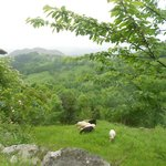 view and sheep