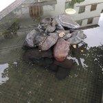 Laguna con tartarughe nel giardino
