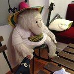 macaco na sala comum do hostel