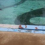 Pool missing tiles