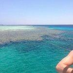 Coral on the Tiran boat trip