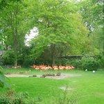 Zoo de Cologne - Flamands roses