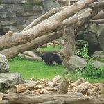 Zoo de Cologne - Ours