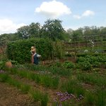 Walled vegetable garden - Packwood House