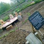 Teddy Bear's picnic - vegetable garden - Packwood House