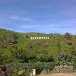 mackwoods tea fectory labookele
