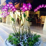 orchids everywhere :)