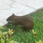 1 of the cute little critters roaming about the resort